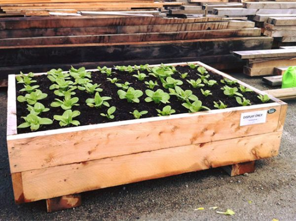 macrocarpa-planter-box-bok-choi.jpg