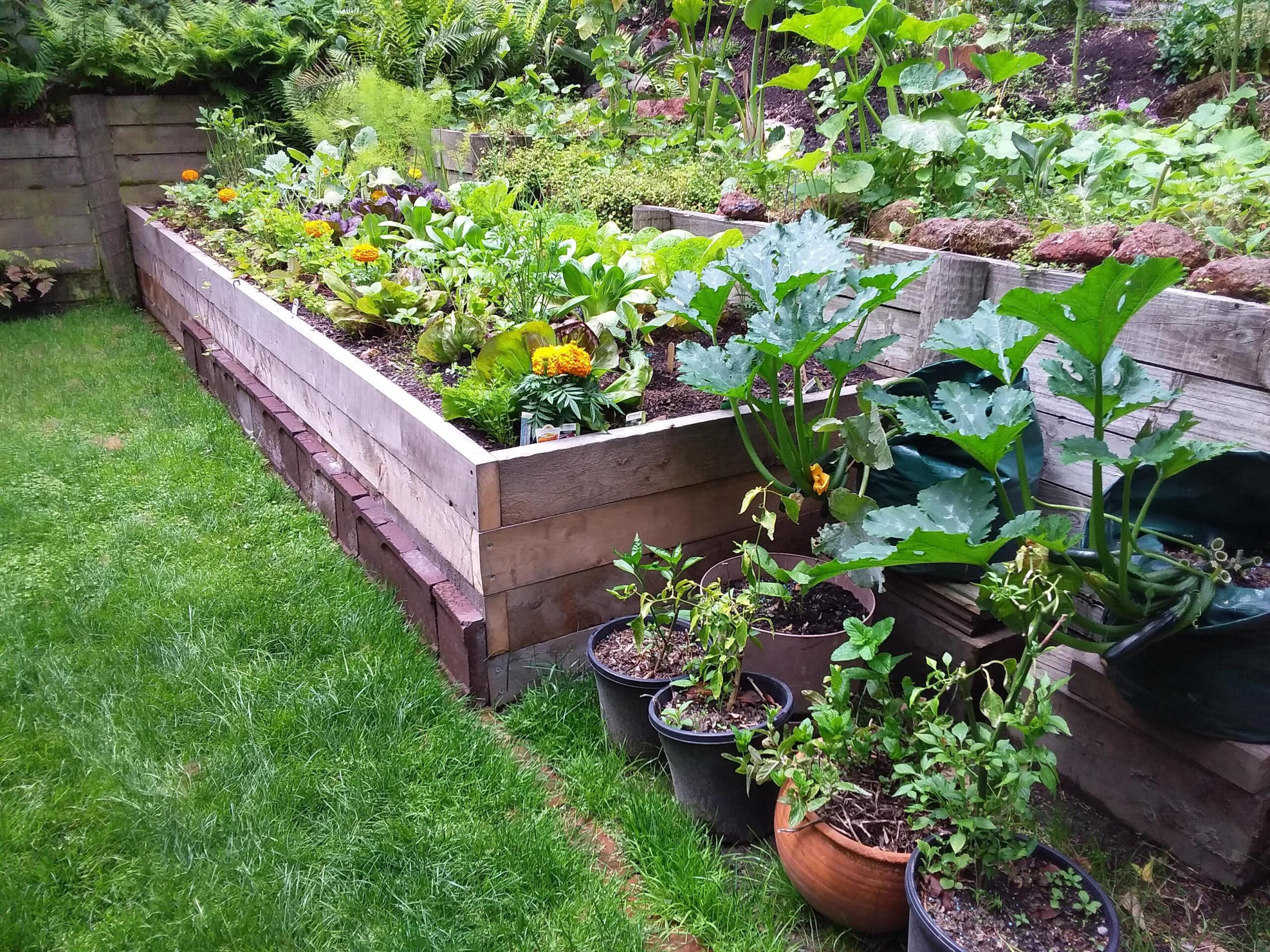 Macrocarpa planter terrace in garden